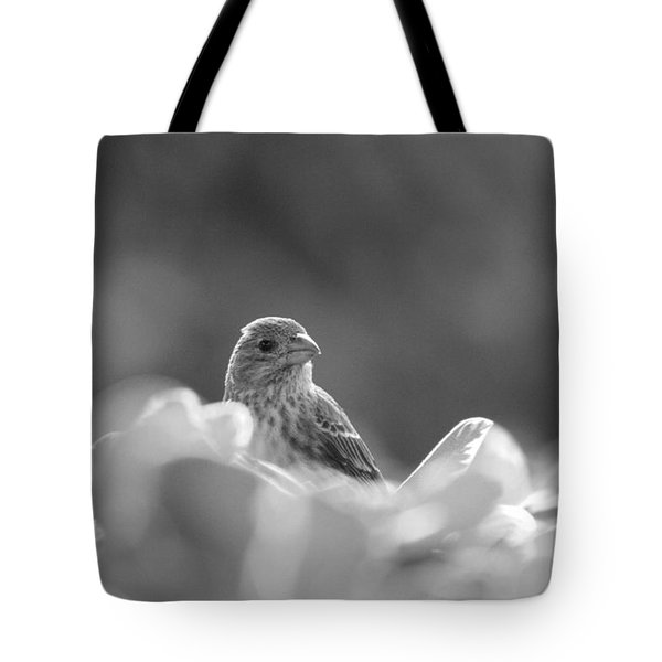 Female House Finch Perched In Black And White Tote Bag