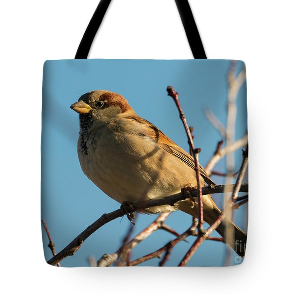 Female House Sparrow Tote Bag by Mike Dawson