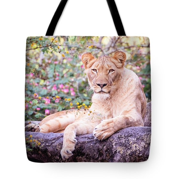 Female Lion Resting Tote Bag by Stephanie Hayes