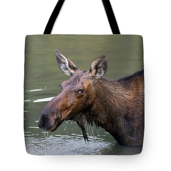 Tote Bag featuring the photograph Female Moose Head by James BO Insogna