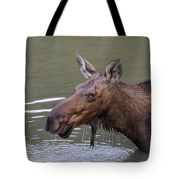 Tote Bag featuring the photograph Female Moose Head Shot by James BO Insogna