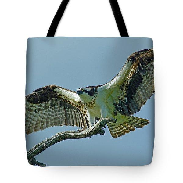 Female Osprey Tote Bag by Larry Nieland