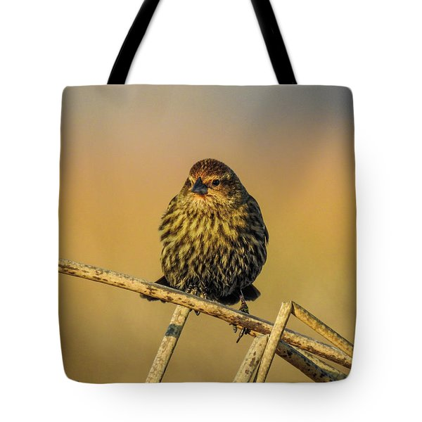 Female Red-winged Blackbird  Tote Bag