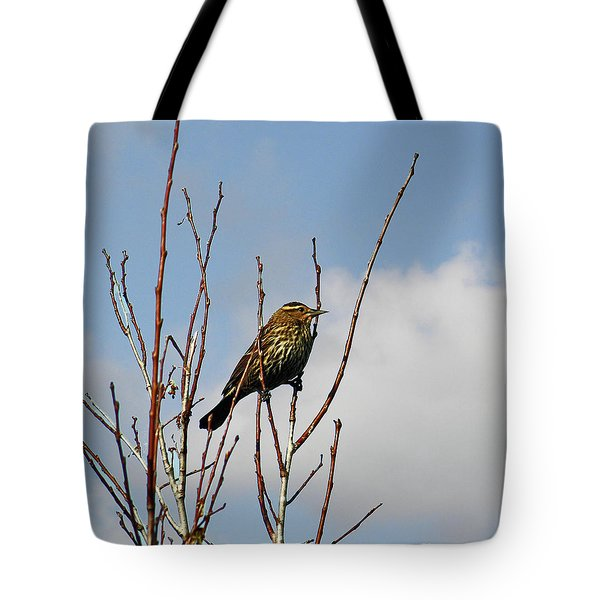 Tote Bag featuring the photograph Female Red Winged Blackbird by Terri Mills