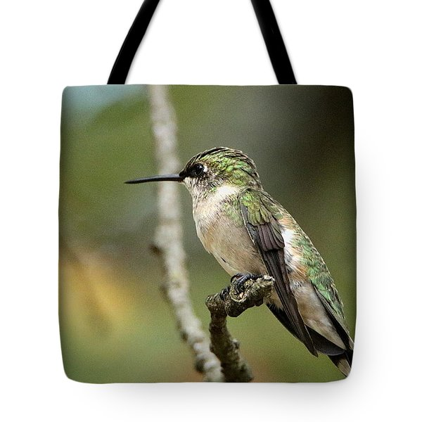 Female Ruby-throated Hummingbird On Branch Tote Bag by Sheila Brown