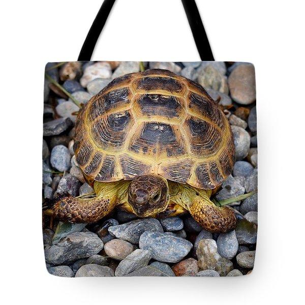 Female Russian Tortoise Tote Bag