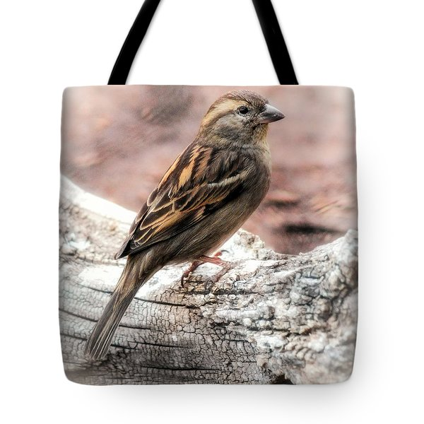 Tote Bag featuring the photograph Female Sparrow by Elaine Malott