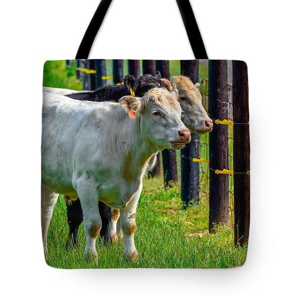 Fenceline Bovines Tote Bag by Brian Stevens