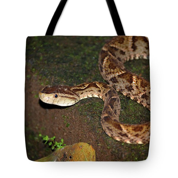 Tote Bag featuring the photograph Fer-de-lance, Botherops Asper by Breck Bartholomew