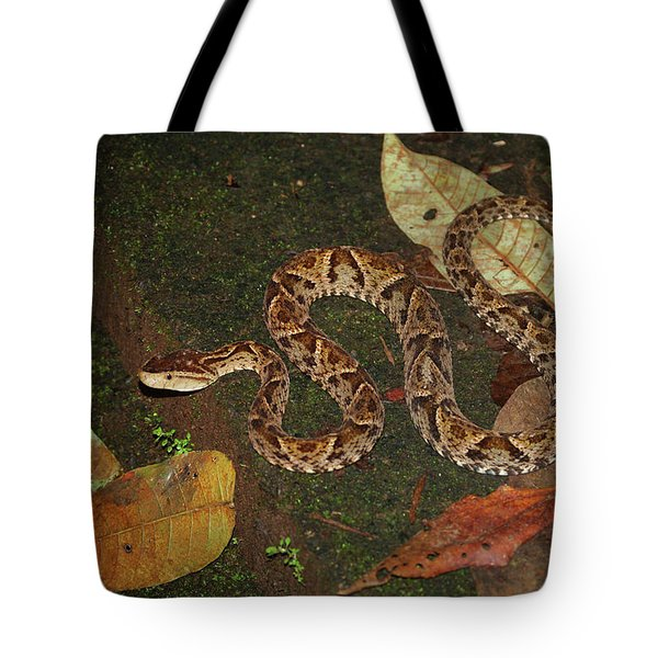 Fer-de-lance, Bothrops Asper Tote Bag