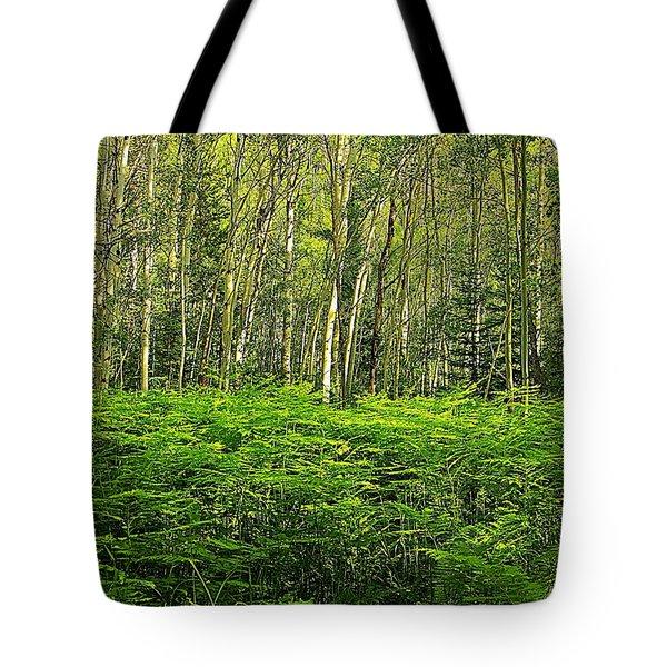 Fern Gully In Aspens Tote Bag by Matt Helm