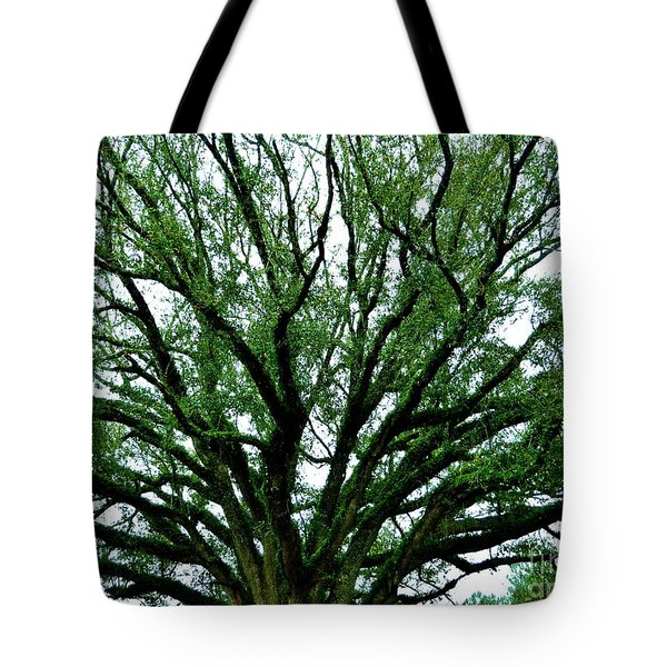 Fern Tree Tote Bag by Tim Townsend