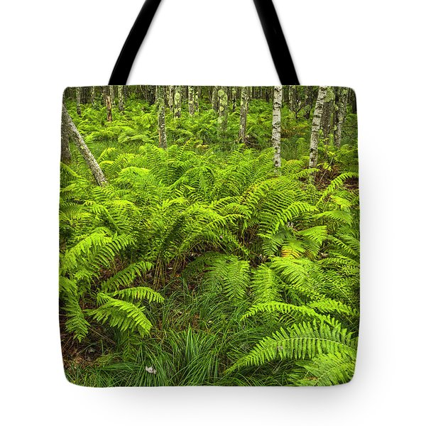 Ferns And Birch In Soft Light Tote Bag
