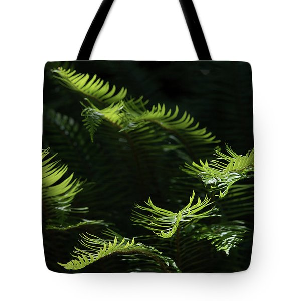 Ferns In The Forest Tote Bag
