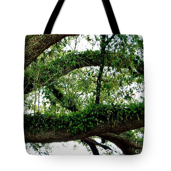 Ferns On A Tree II Tote Bag