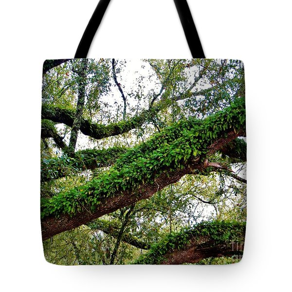 Ferns On A Tree Tote Bag by Tim Townsend
