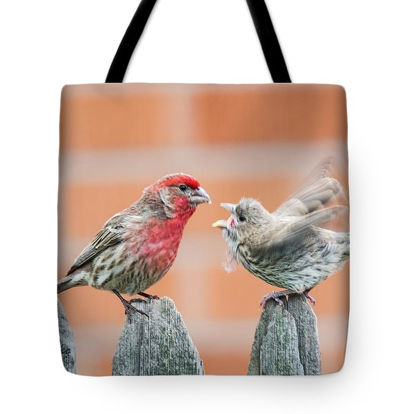 Feuding Finches Tote Bag