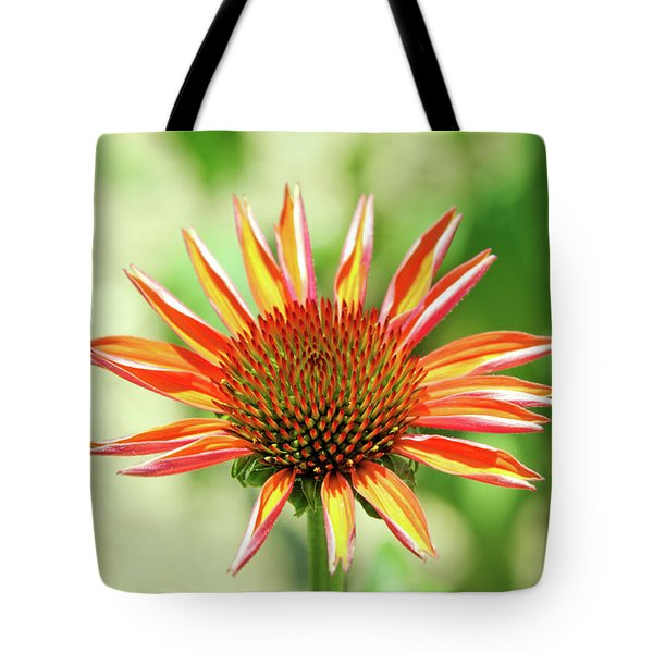 Tote Bag featuring the photograph Fibonacci by David Chandler