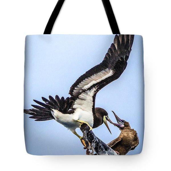 Fighting Boobie Birds Tote Bag