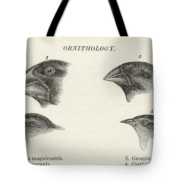Finches With Beaks Adapted To Different Tote Bag