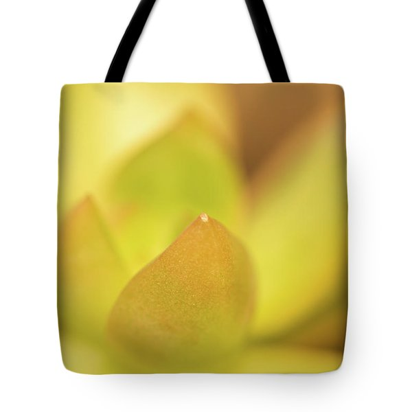 Tote Bag featuring the photograph Find Focus In Nature by Ana V Ramirez