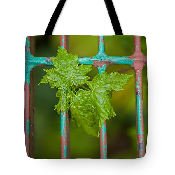 Tote Bag featuring the photograph Finding The Light by Fran Riley