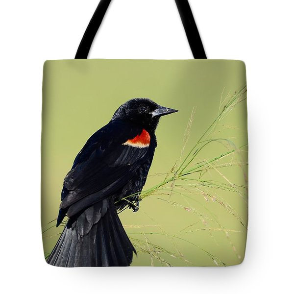 Tote Bag featuring the photograph Fine Perch by Kathy Gibbons