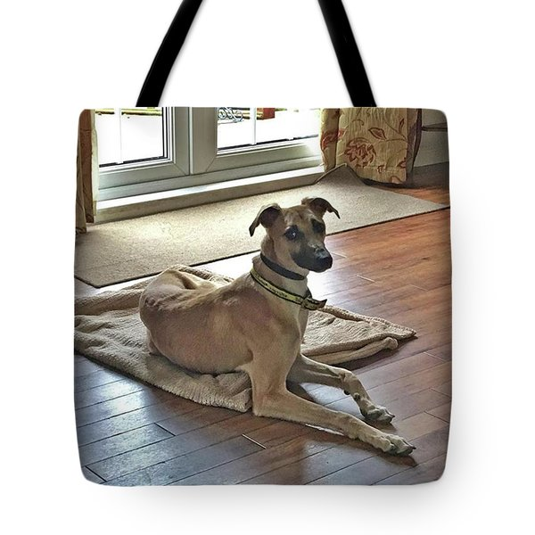 Finly - Ava The Saluki's New Companion Tote Bag