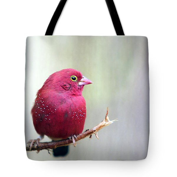 Fire Finch Tote Bag