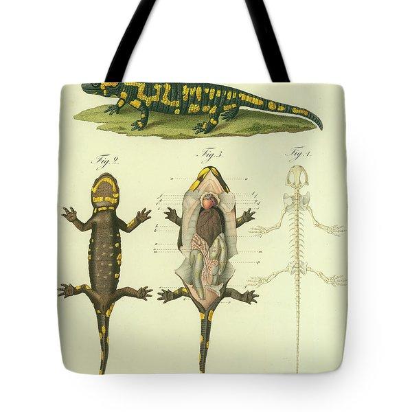 Fire Salamander Anatomy Tote Bag