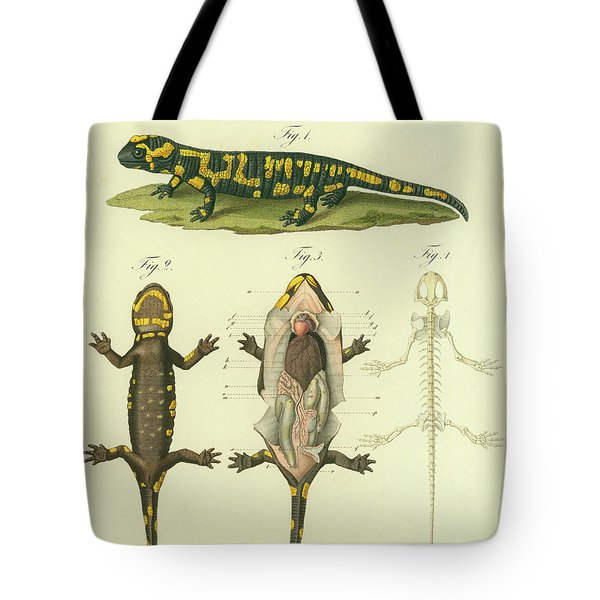 Tote Bag featuring the drawing Fire Salamander Anatomy by Christian Leopold Mueller