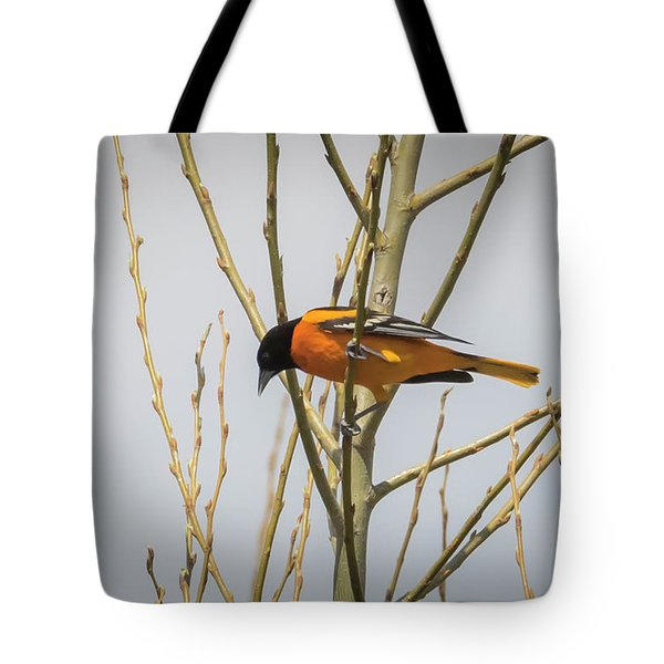 Tote Bag featuring the photograph First Baltimore Oriole Of The Year  by Ricky L Jones