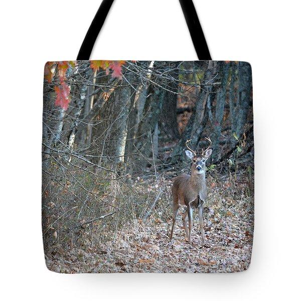 First Buck  Tote Bag by Brenda Bostic