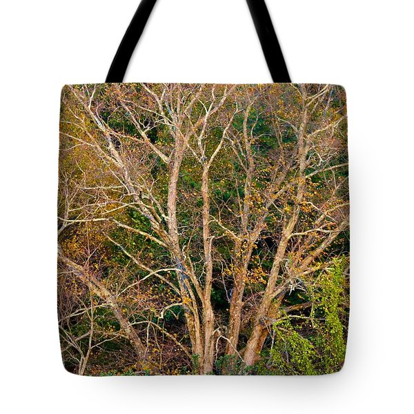 First Leaves To Fall Tote Bag