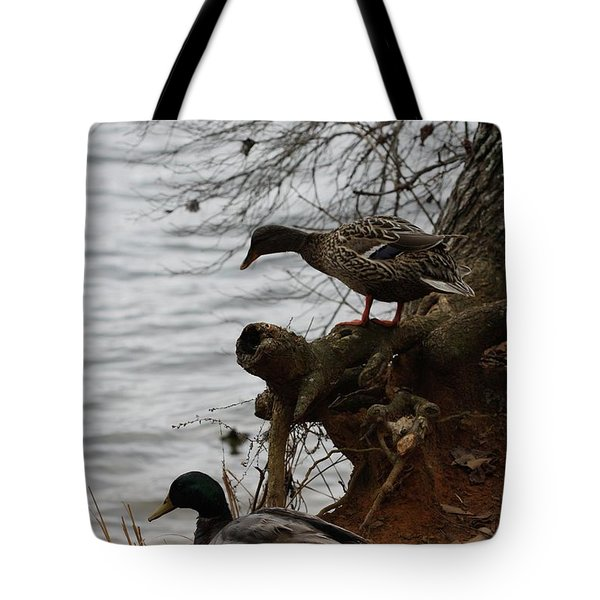 Tote Bag featuring the photograph First One In by Kim Henderson