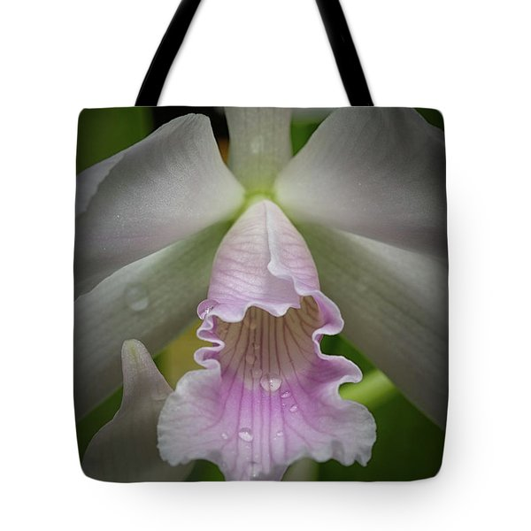 First Orchid Straight On Tote Bag