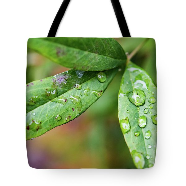 First Signs Of Fall    Tote Bag