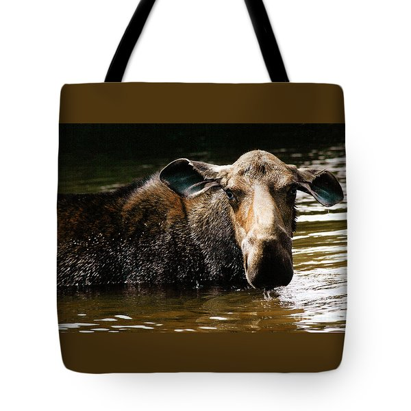 First West Branch Pond Moose Tote Bag
