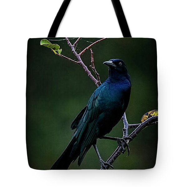 Male Boat-tailed Grackle Tote Bag by Cyndy Doty