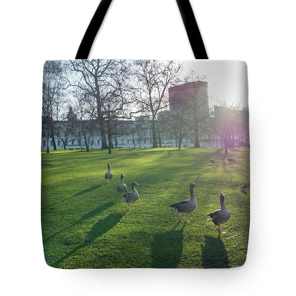 Five Ducks Walking In Line At Sunset With London Museum In The B Tote Bag