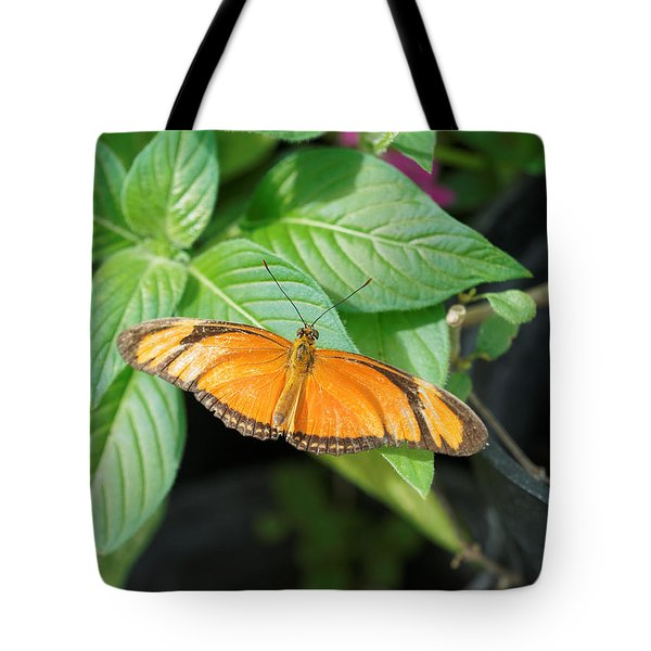 Tote Bag featuring the photograph Flambeau Butterfly by Paul Gulliver
