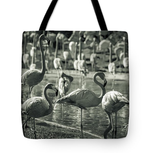 Flamboyance Of Flamingos Tote Bag by Jason Moynihan
