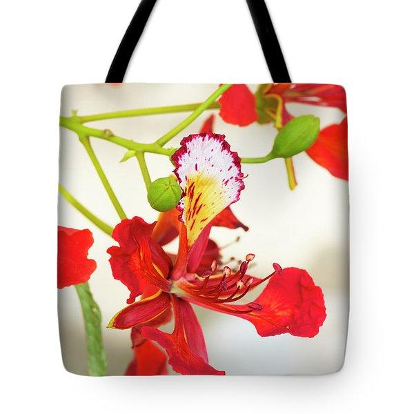 Flame Tree Flower Tote Bag