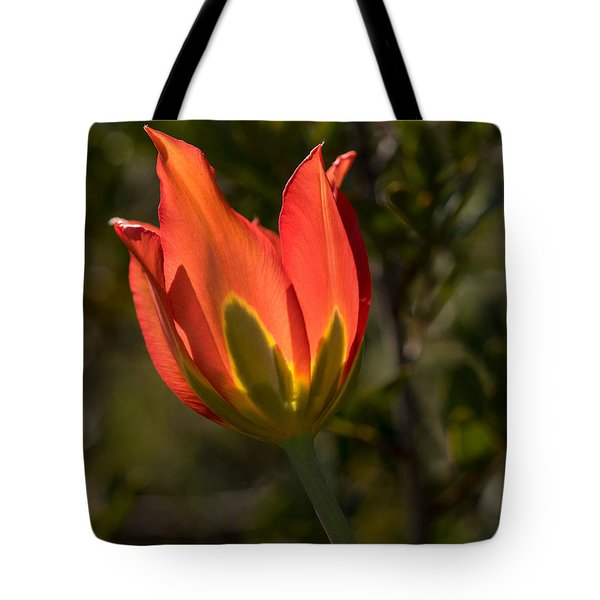 Flaming Beauyy Tote Bag by Uri Baruch