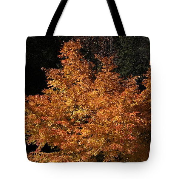 Tote Bag featuring the photograph Flaming Tree Brush by Deborah  Crew-Johnson