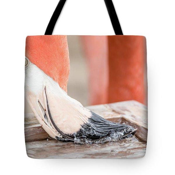 Flamingo At Sea World In Orlando Florida Tote Bag by Peter Ciro