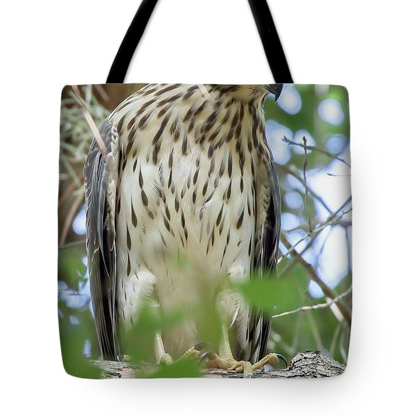 Fledgling Red-shouldered Hawk 2 Tote Bag