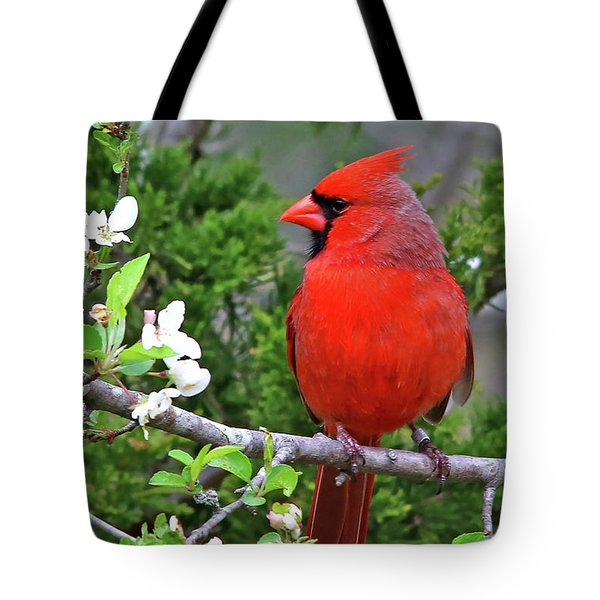 Flirty Red Tote Bag by James F Towne