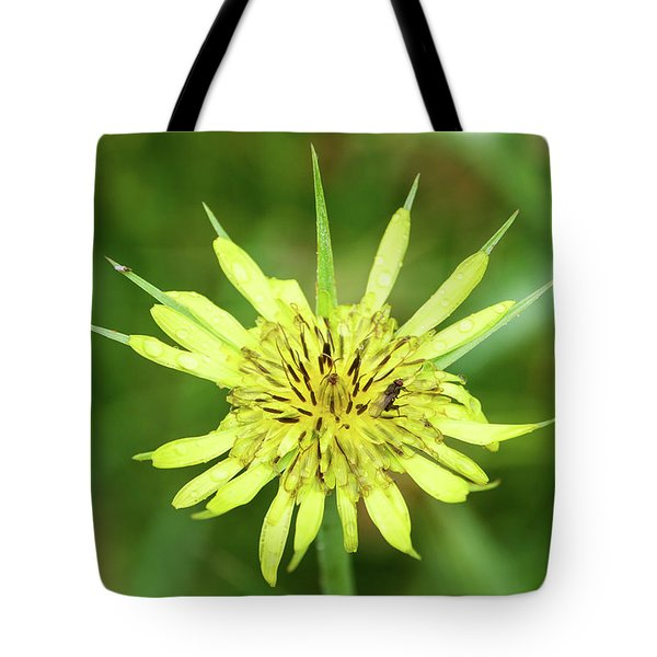 Tote Bag featuring the photograph Fll-4 by Ellen Lentsch