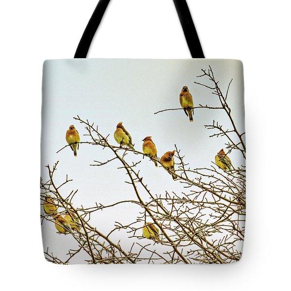 Flock Of Cedar Waxwings  Tote Bag